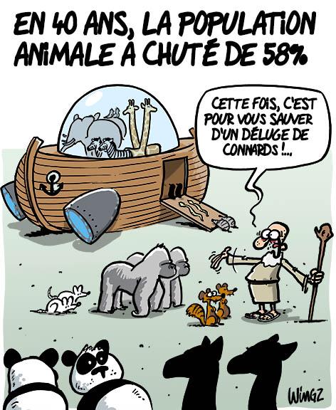 étude wwf disparition animal extinction animaux